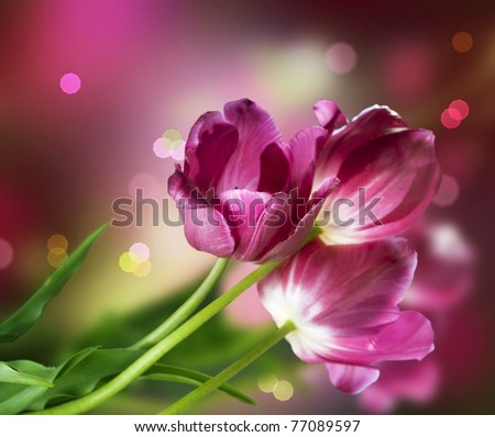 Flowers Design - stock photo