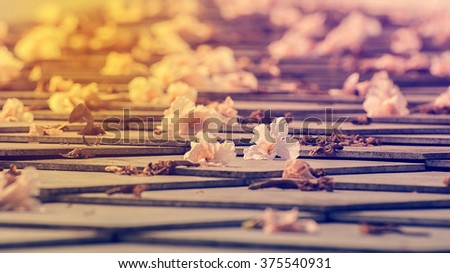 Flowers Drop On The Roof, Pink Trumpet Flower, Vintage Style, Soft Focus - stock photo