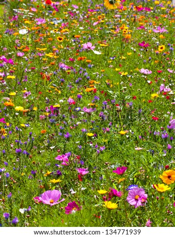 Flowers Field Background - stock photo