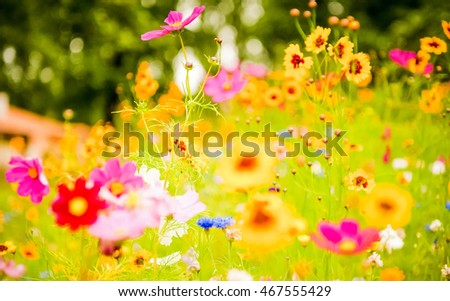 flowers, flower, spring, field, red, beautiful, yellow, plant, pink, blossom