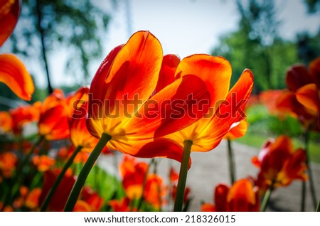 flowers/flowers - stock photo