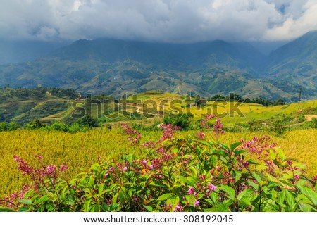 Flowers from a valley in Vietnam. - stock photo