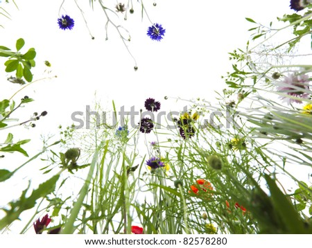 flowers from below - stock photo