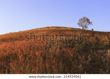 flowers grass and alone tree on the mountain with blue sky