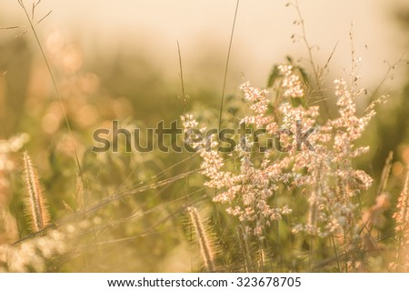 Flowers grass blurred bokeh background vintage.
