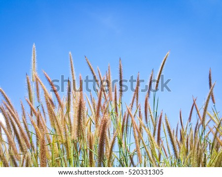 Flowers grass fields with blue sky backgrounds