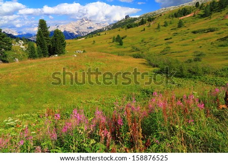 Flowers, green meadow and distant mountains, Dolomite Alps, Italy - stock photo