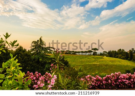 Flowers, green weeds, leaves, plants and trees on vineyards backgrounds on cultivated hills in Italian countryside the small village of Dozza near Bologna in Emilia Romagna - stock photo
