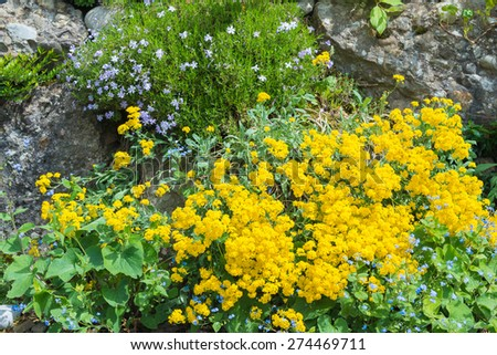 Flowers grow spring between rocks stock photo edit now 274469711 flowers grow in spring between rocks mightylinksfo