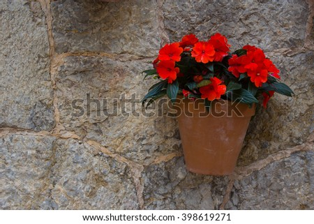 flowers (Impatiens, Busy Lizzie) on the wall decoration - stock photo