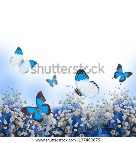 Flowers in a bouquet, blue hydrangeas and butterfly - stock photo