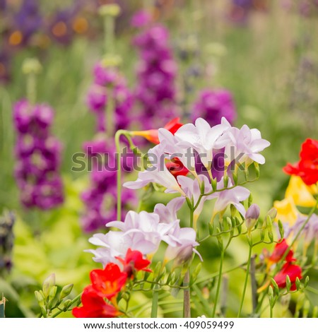 Flowers in a garden, square crop - stock photo