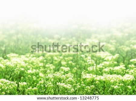 flowers in a green field with copy-space (shallow DOF); spring series D - stock photo
