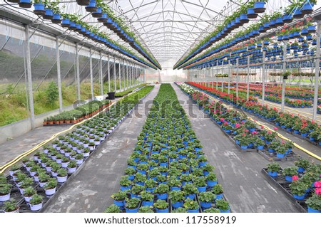 flowers in a Greenhouse - stock photo