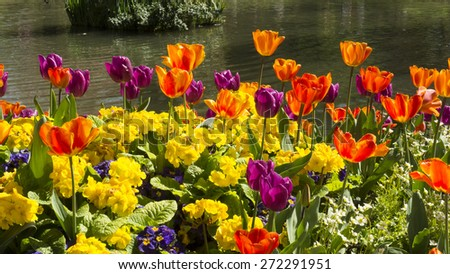 flowers in a parc in Paris - stock photo