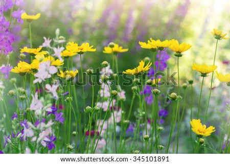flowers in a sunny summer meadow - stock photo