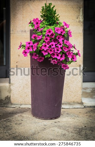 Flowers in a vase on the Italian area in Tuscany, in Europe - stock photo