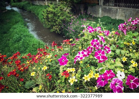 Flowers in bed and creek. Schwabach, Bavaria, Germany.