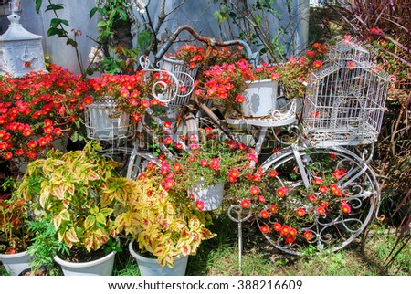 Flowers in bicycle at garden