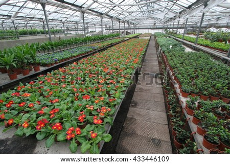 flowers in big hothouse