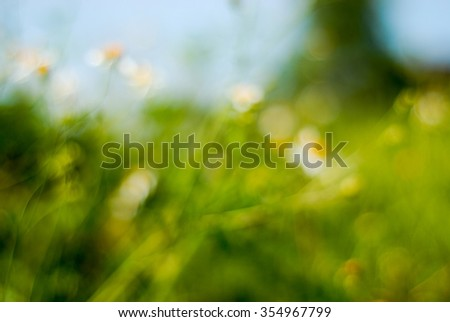 flowers in blur
