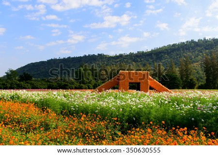 flowers in farm with blue sky