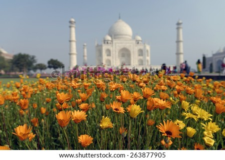 Flowers in focus on the background of OUT OF FOCUS Taj mahal at Agra A UNESCO World Heritage Site, A monument of love, the Greatest White marble tomb in India, Agra, Uttar Pradesh. - stock photo