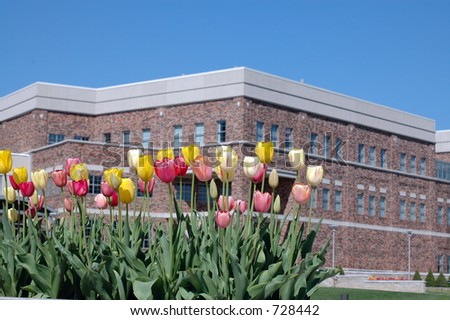 flowers in front of building