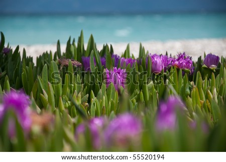 flowers in front of the beach in the mediterranean - stock photo