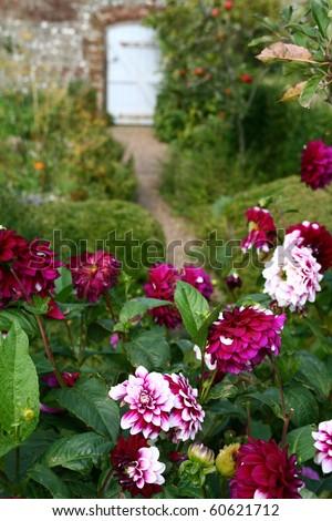 flowers in garden and walk path to small door. wall garden in bloom in the summer - stock photo