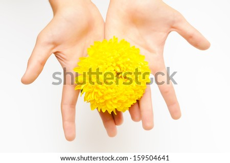 flowers in hands - stock photo