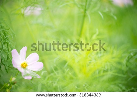 Flowers in Hanoi, VIetnam - stock photo