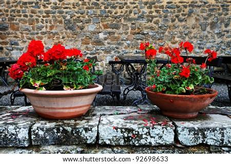 Flowers in Montalcino, Tuscany, Italy - stock photo