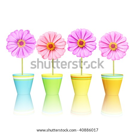 Flowers in pots - stock photo