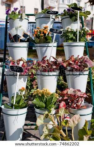 Flowers in pots. Placed on the street - stock photo