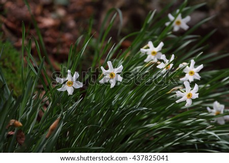 Flowers in spring - stock photo