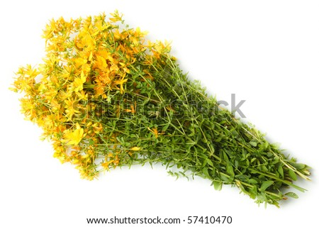 Flowers in studio against a white background. - stock photo