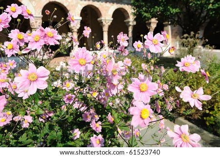 Flowers in the Cloisters' garden in New York City. - stock photo