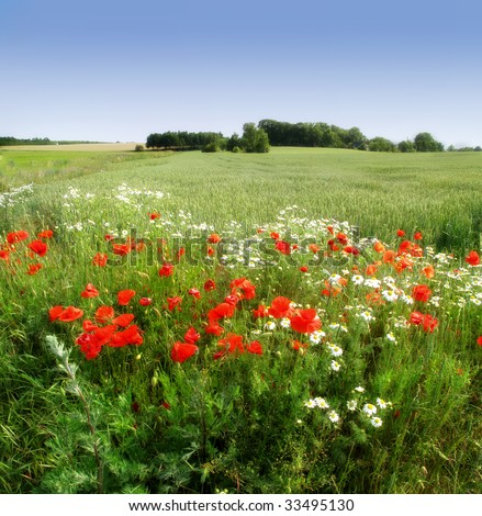 Flowers in the countryside - stock photo
