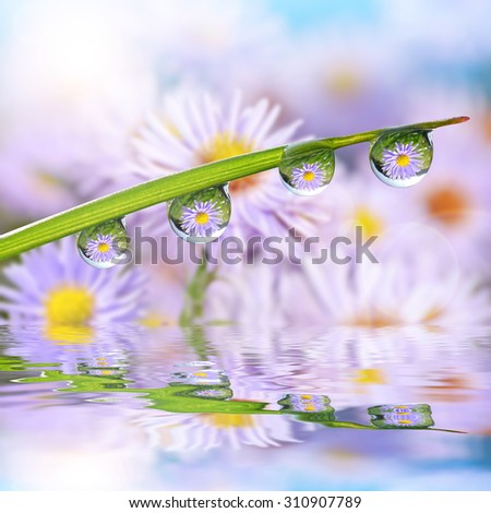 Flowers in the drops of dew on the green grass. Nature background. - stock photo