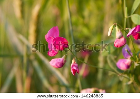 Flowers in the field at dawn - stock photo