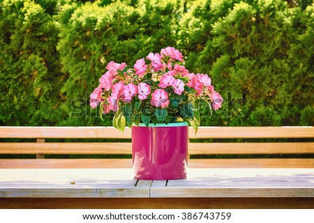 Flowers in the Flower Pot - stock photo