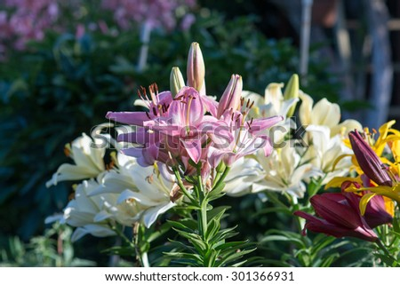 flowers in the garden - stock photo