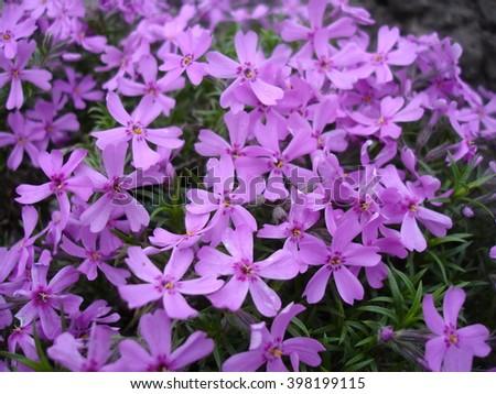 Cubiertas de flores
