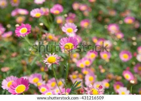 Flowers in the garden, decorate the house with flowers.