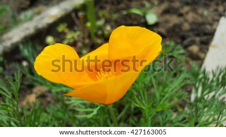flowers in the grass - stock photo