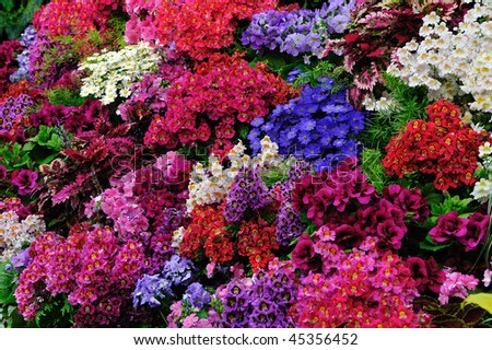 Flowers in the historic butchart gardens (over 100 years in bloom), vancouver island, british columbia, canada - stock photo