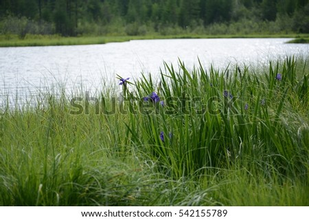 Flowers in the lake.