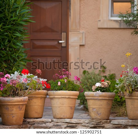 Flowers in the pots - stock photo