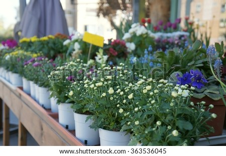 Flowers in the pots at the street near flower shop  in defocused background - stock photo